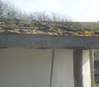 Sedum growing on the roof.  Sheep in next door field.